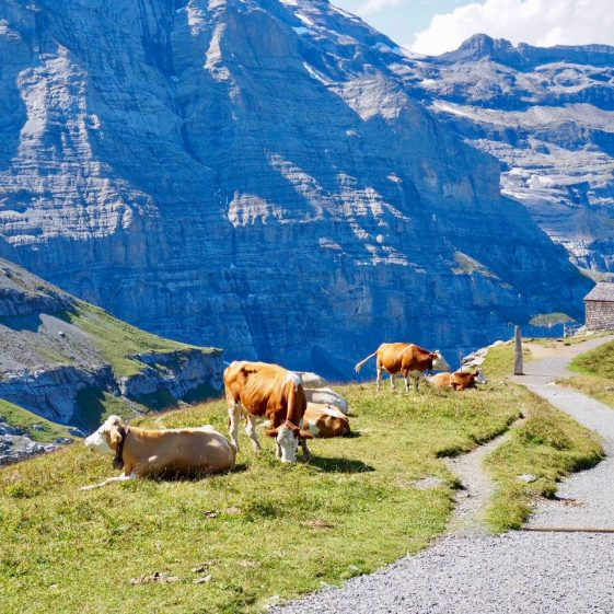 Randonnee tours offers cycling and hiking trips in Switzerland